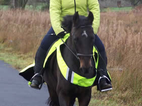 Fizz enjoying a winter hack (December 09)